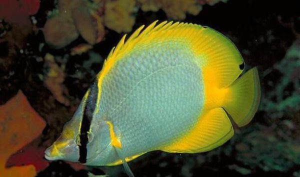 热带鱼饲养